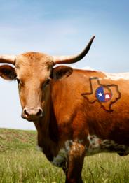 Conservative Republican Ranchers Brand Texas GOP Vote
