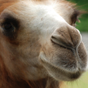 Camels nose.jpg