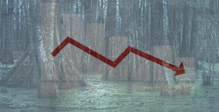 swamp economy