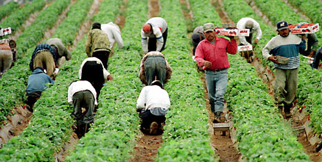 migrant-wk.jpg