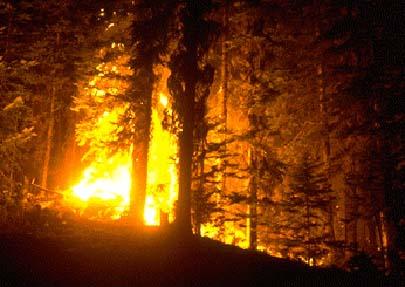 wildfire-tx.jpg