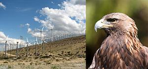 wind-energy-golden-eagles.jpg